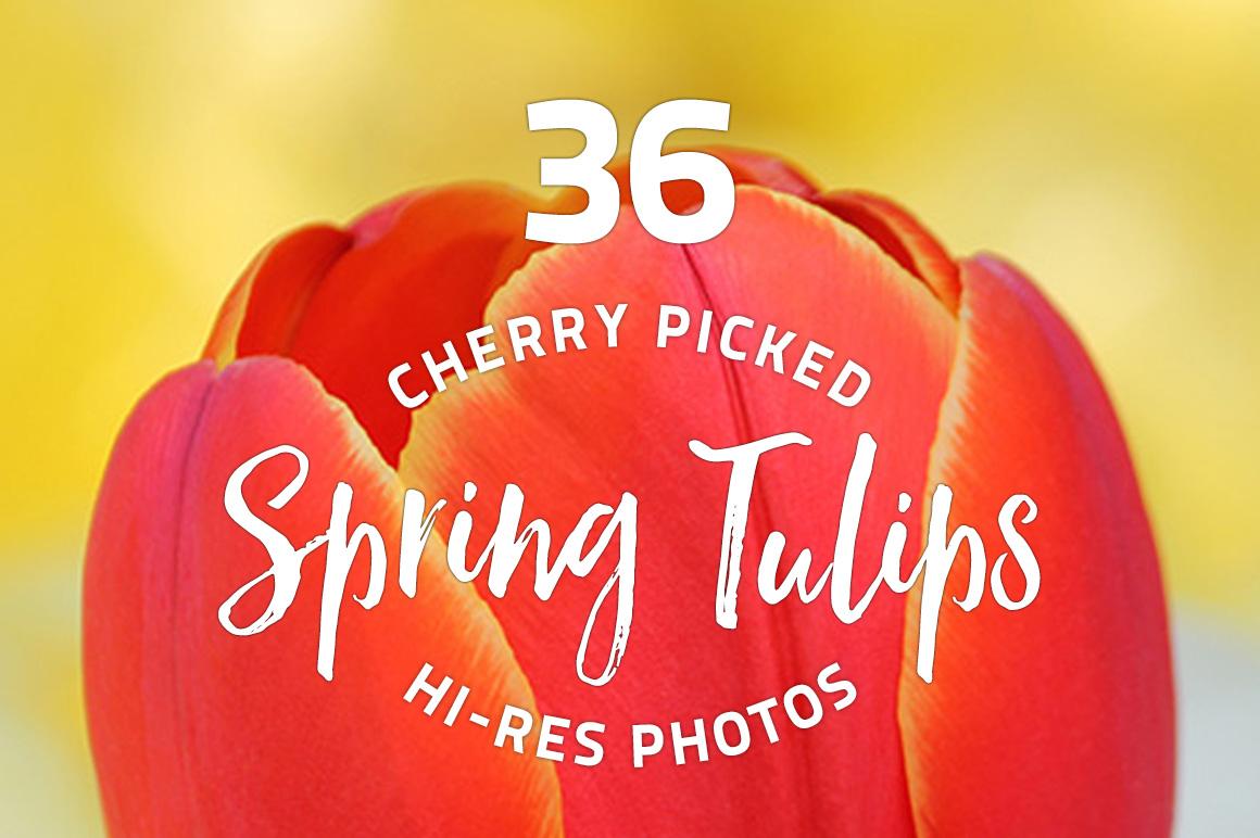 Spring-Tulips-Photo-Bundle.jpg