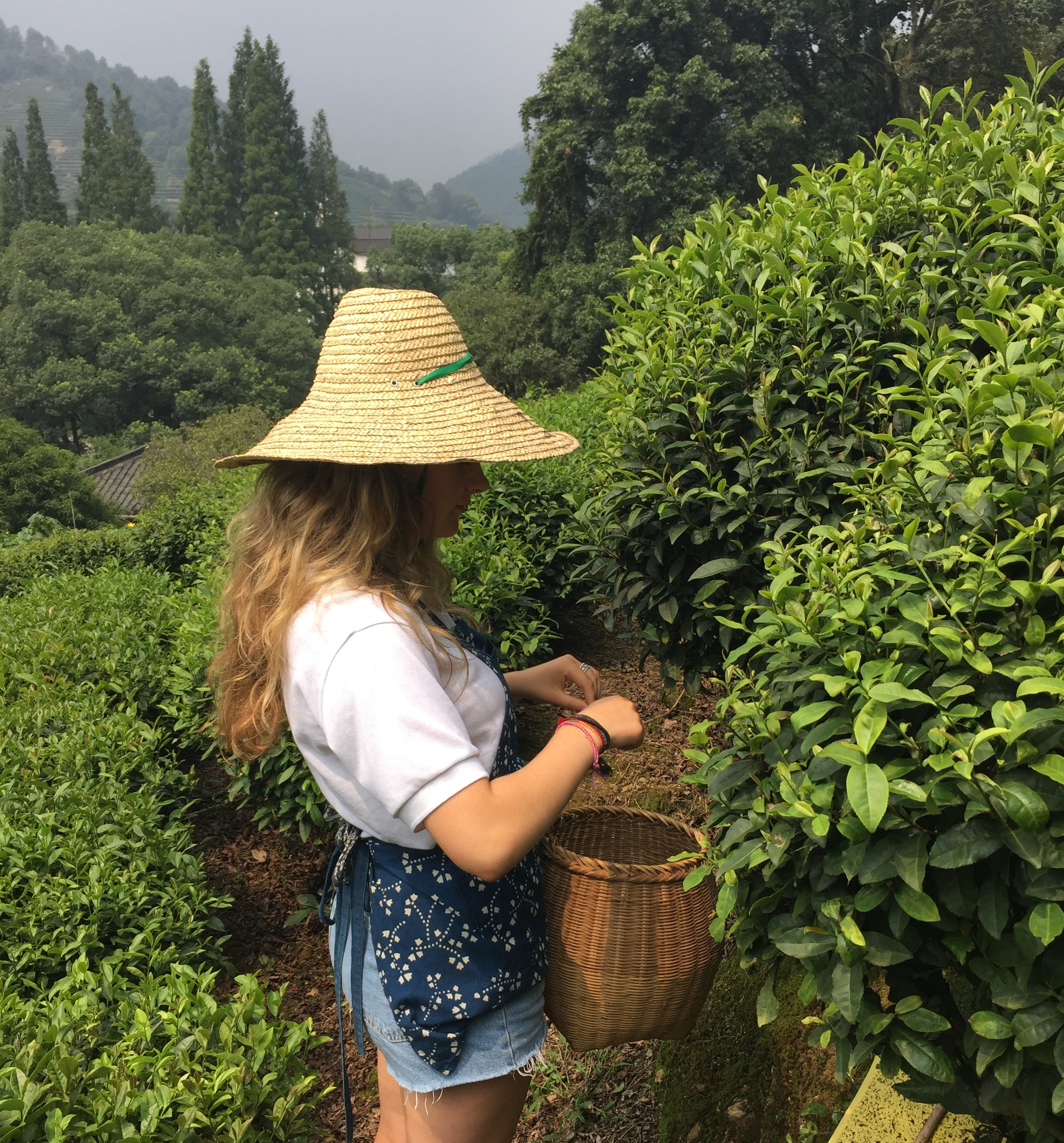 Katy picking tea leaves at plantation in China, after a business trip there with her family