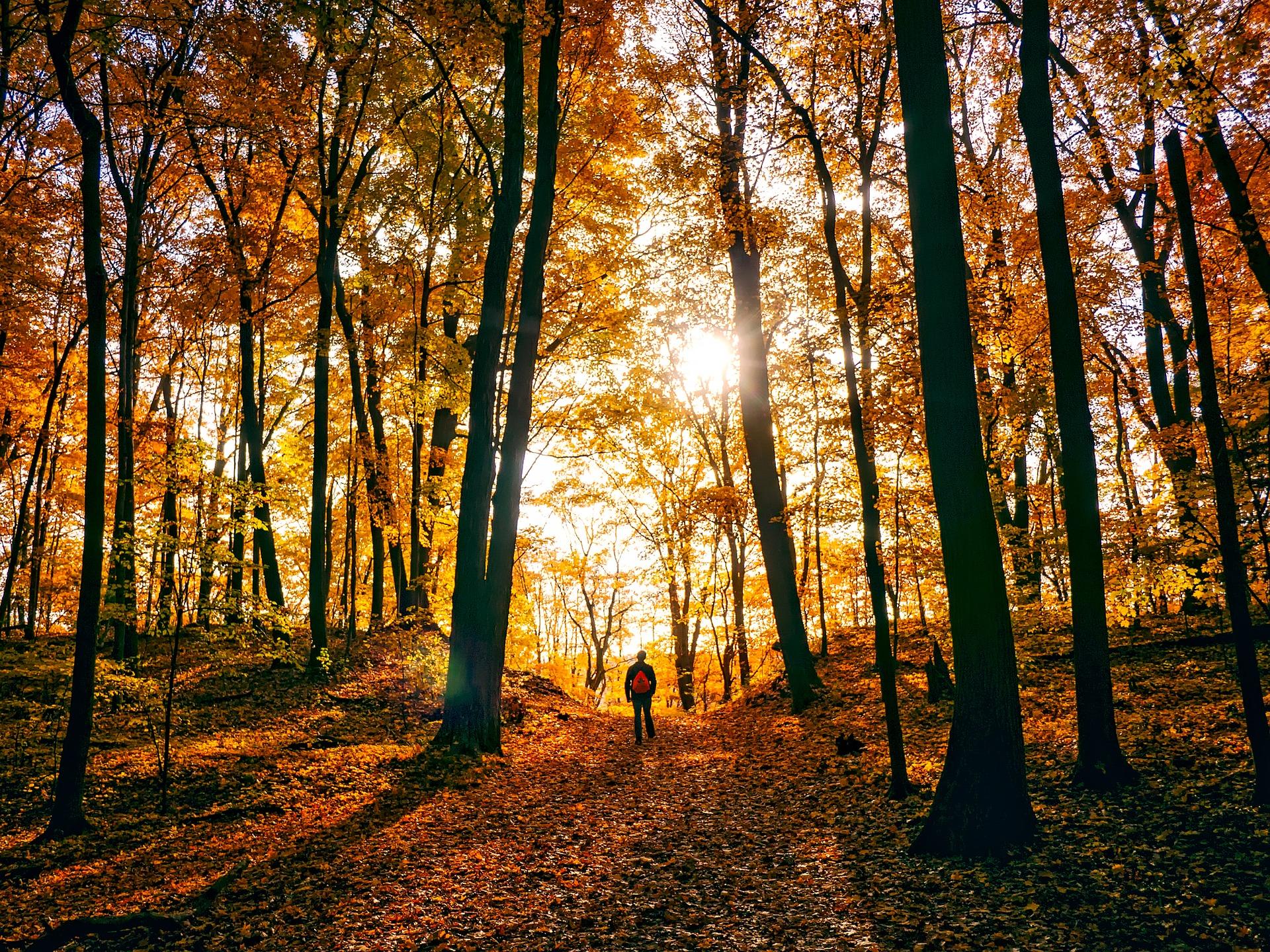 autumn-1812180_1920.jpg