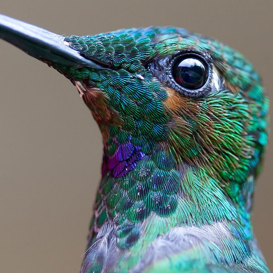 real hummingbird close-up.jpg