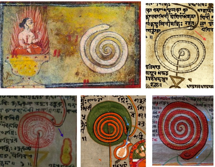 "Images from recently discovered Chakra Scrolls, featuring Kundalini as Shiva's 'Coiled Power,."" In this birth motif taught by Pūrnānanda (and many other Tantrics), Shiva, who symbolizes our 'awakened consciousness,' is born through his own power in the body of a yogi at the peak moment of Yoga practice."