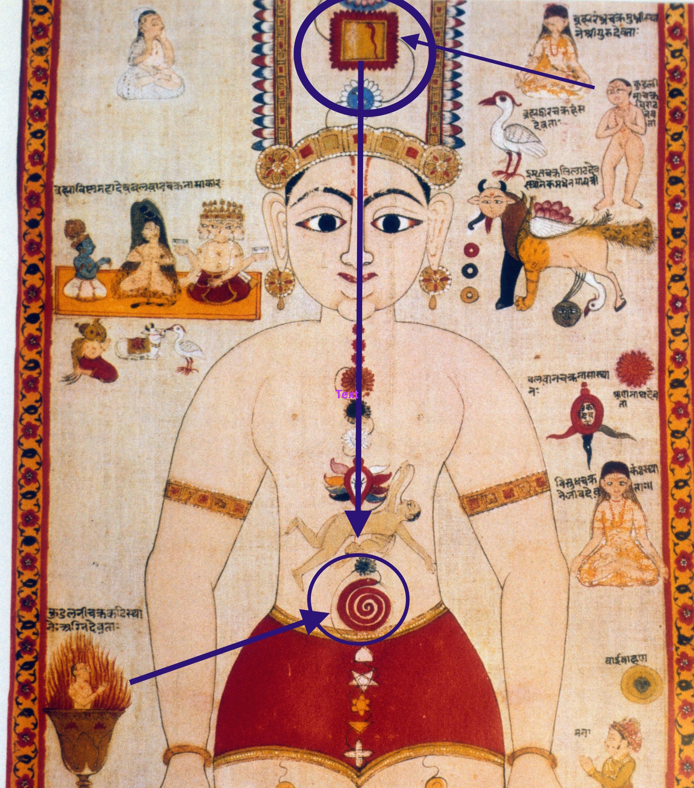 Chakra Scroll featuring the two Kundalinīs, with the upper Kuṇḍalinī descending from the top mūlādhāra chakra, indicated by the square above the head