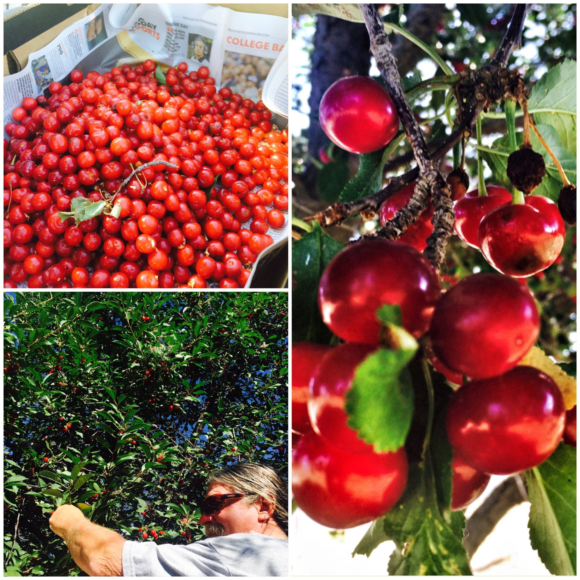 Earth Day - What's hot in Backyard Orchard CultureSelecting, transplanting, pollination, fertilizing, thinning and pruning your home orchard