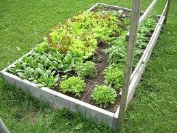 Plant Your Plate Part 2 - The next steps to successful growing your own. Focusing on vegetable care and culture. FREE CLASS