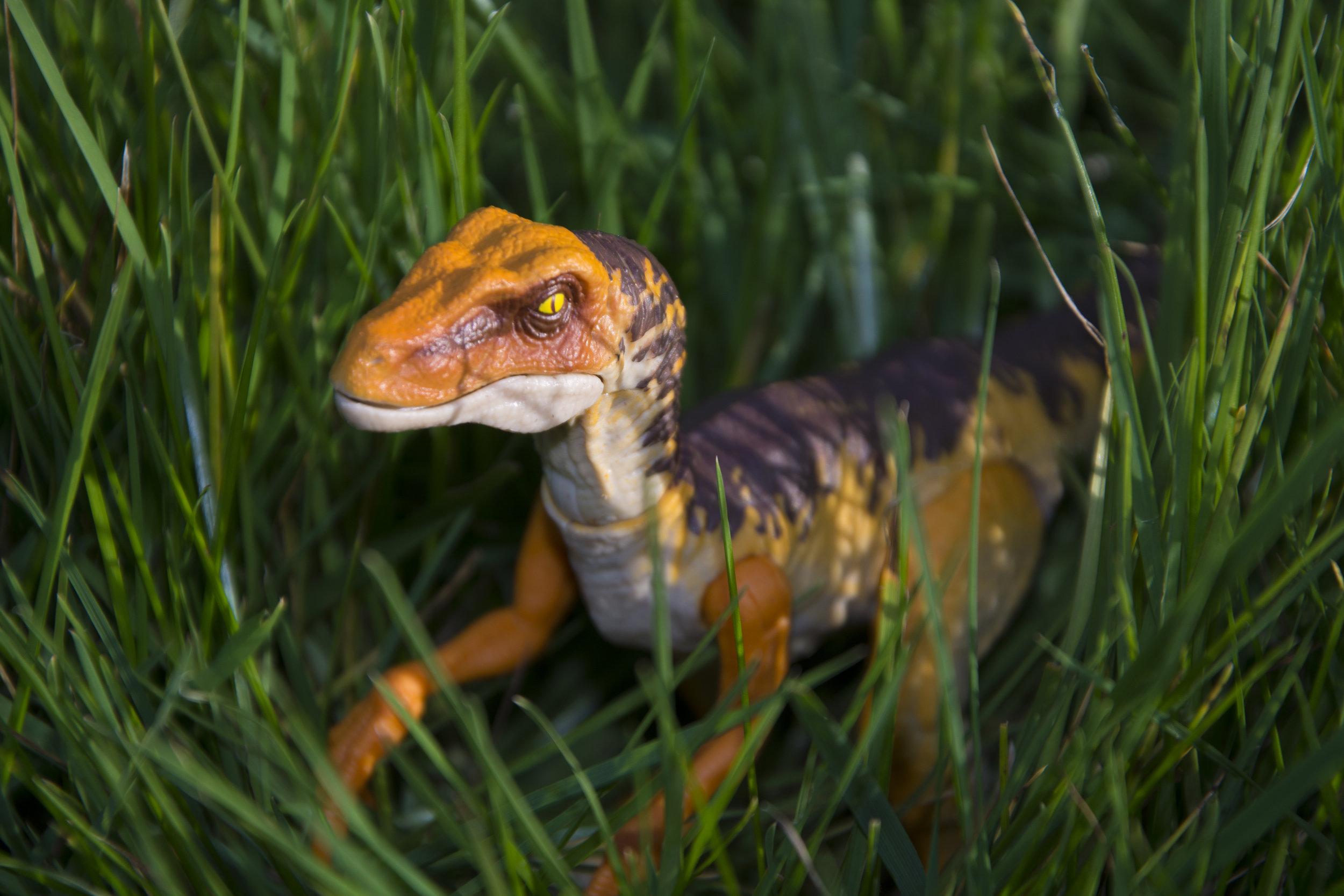 Raptors In The Tall Grass.jpg