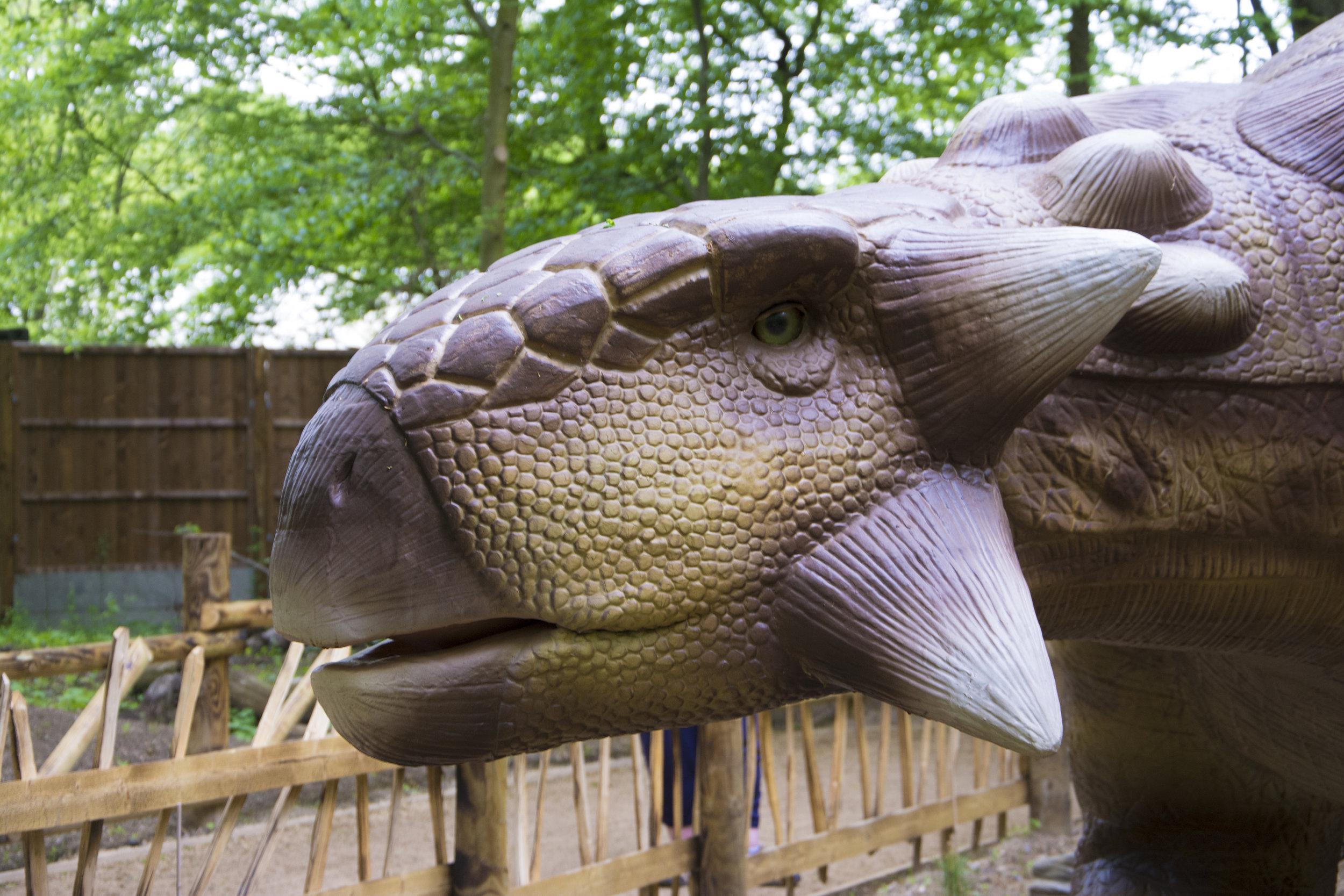 Ankylosaurus 1.jpg