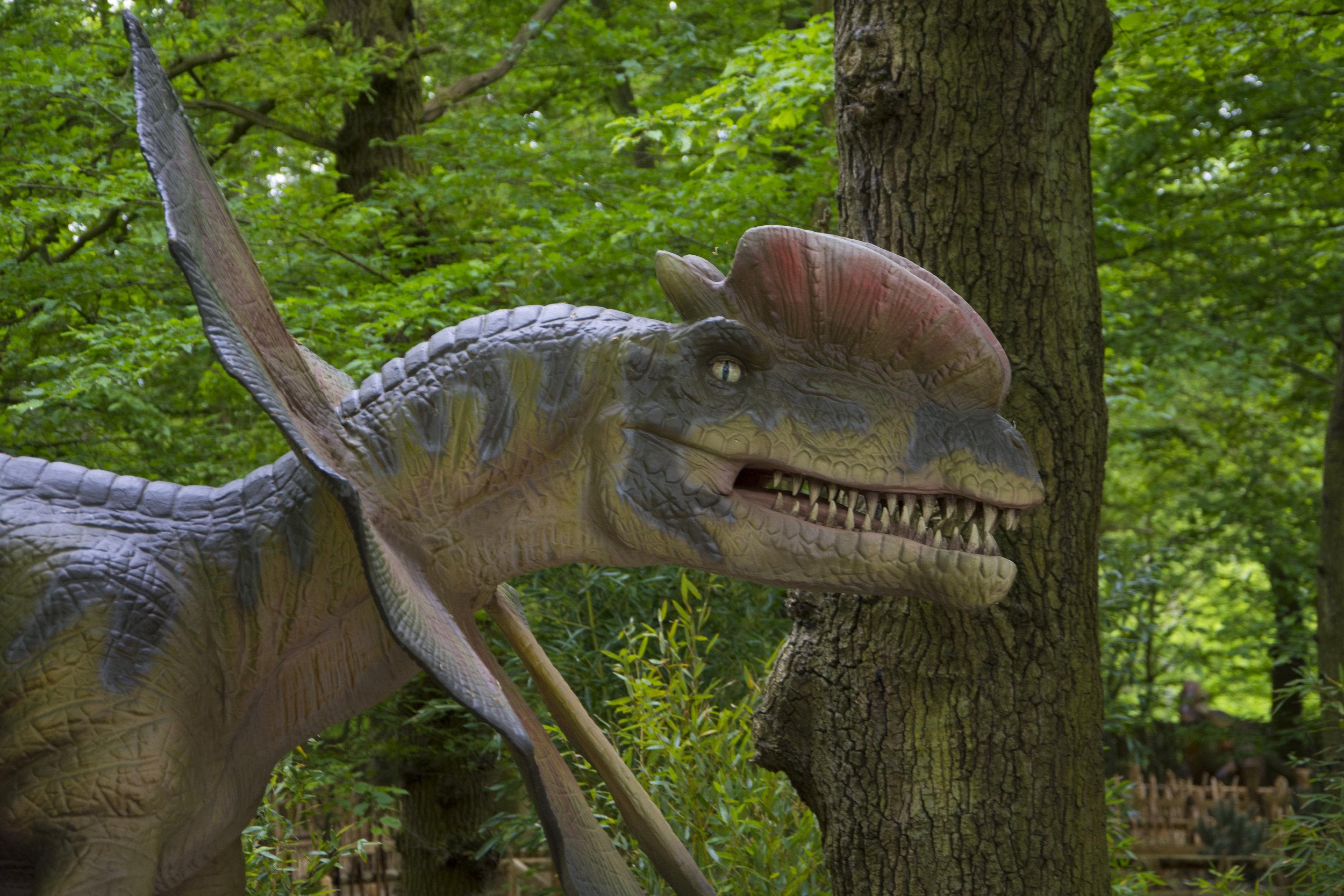 Dilophosaurus 1.jpg