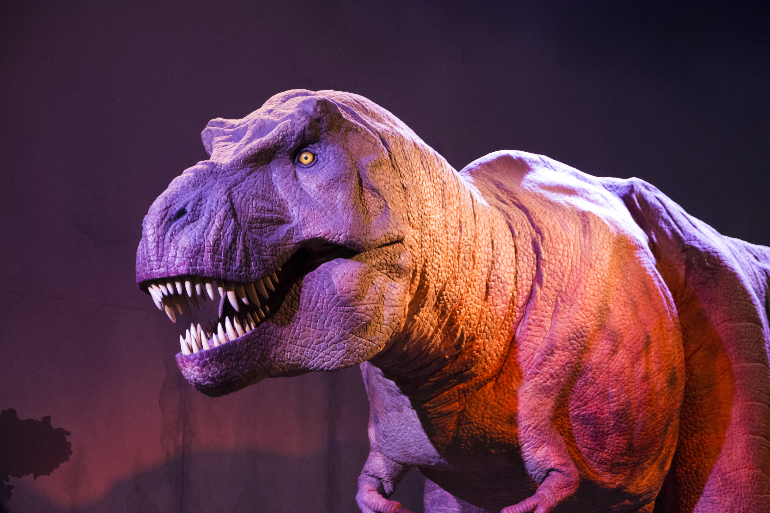 Animatronic Dino 1.jpg