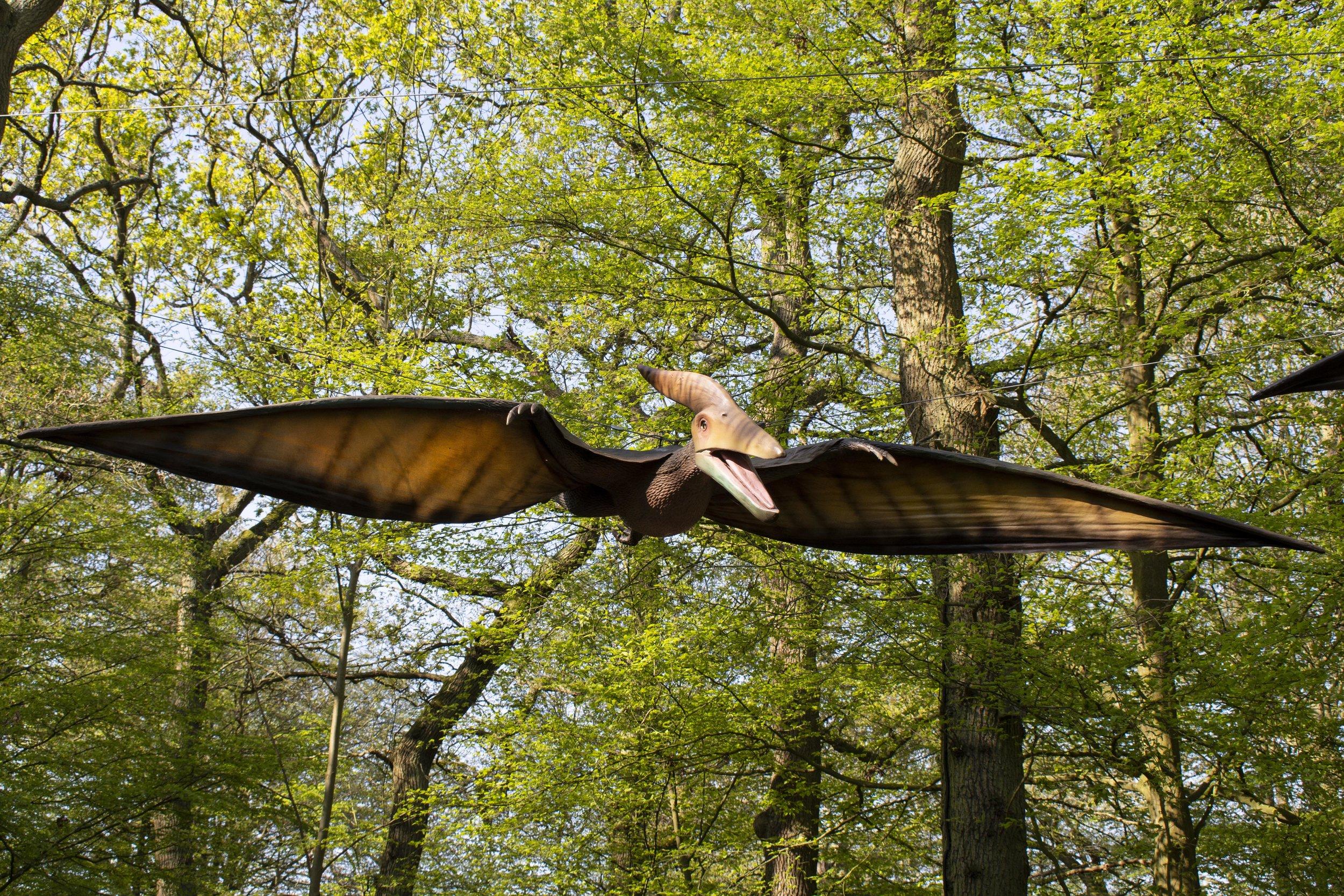 Pteranodon Singular.jpg