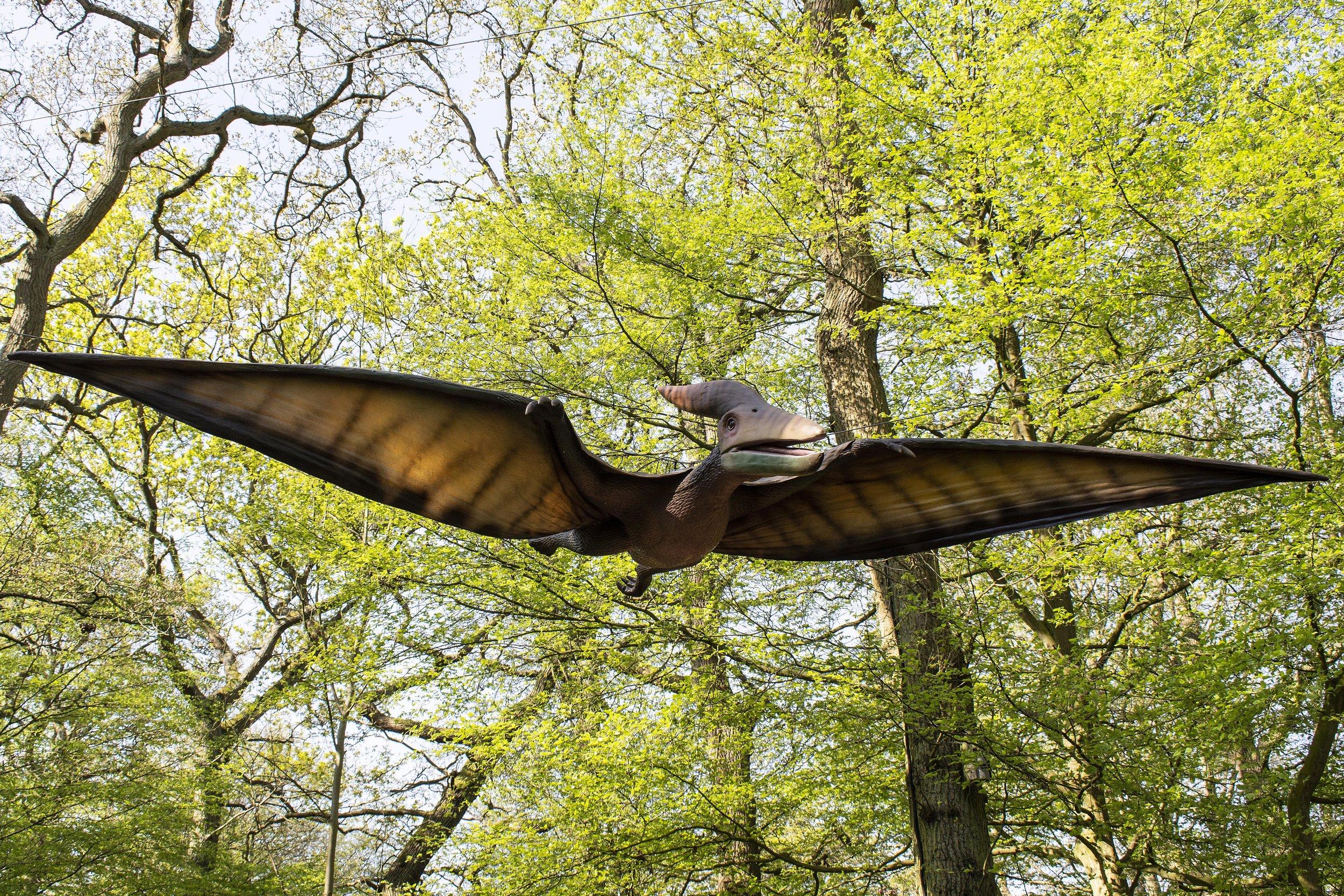 Pteranodon Singular 1.jpg