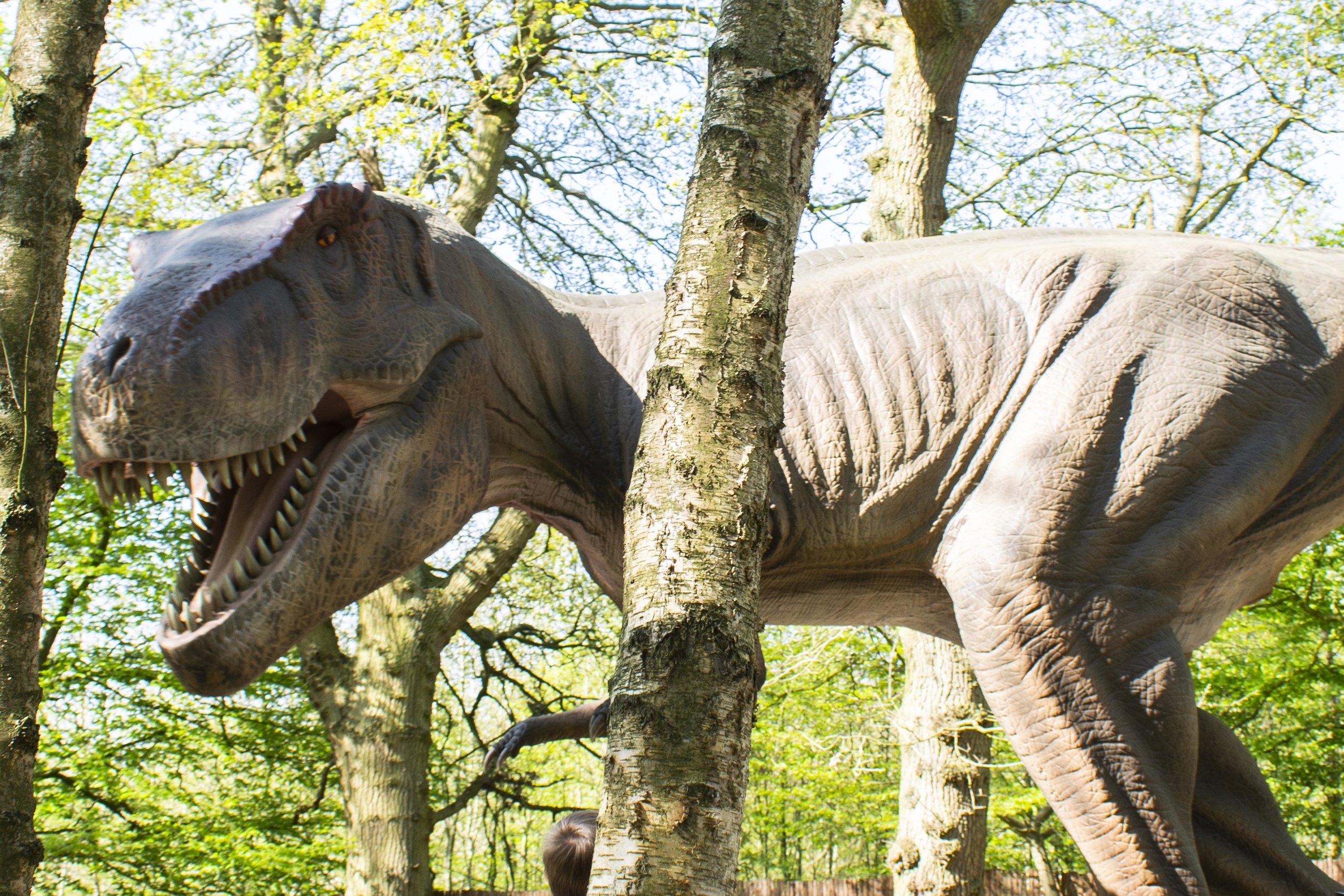 T-Rex 3.jpg