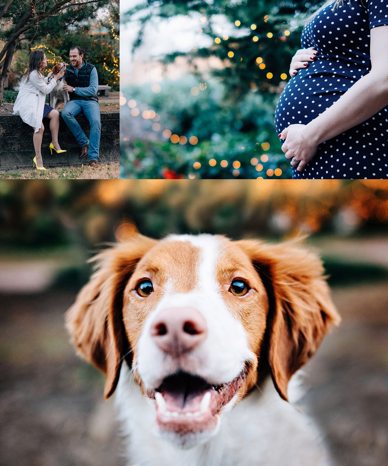 norfolk-maternity-newborn-photographer-couple-with-brittany-spaniel-photographed-downtown-norfolk-melissa-bliss-photography.jpg