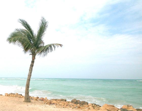 beach-1523354.jpg