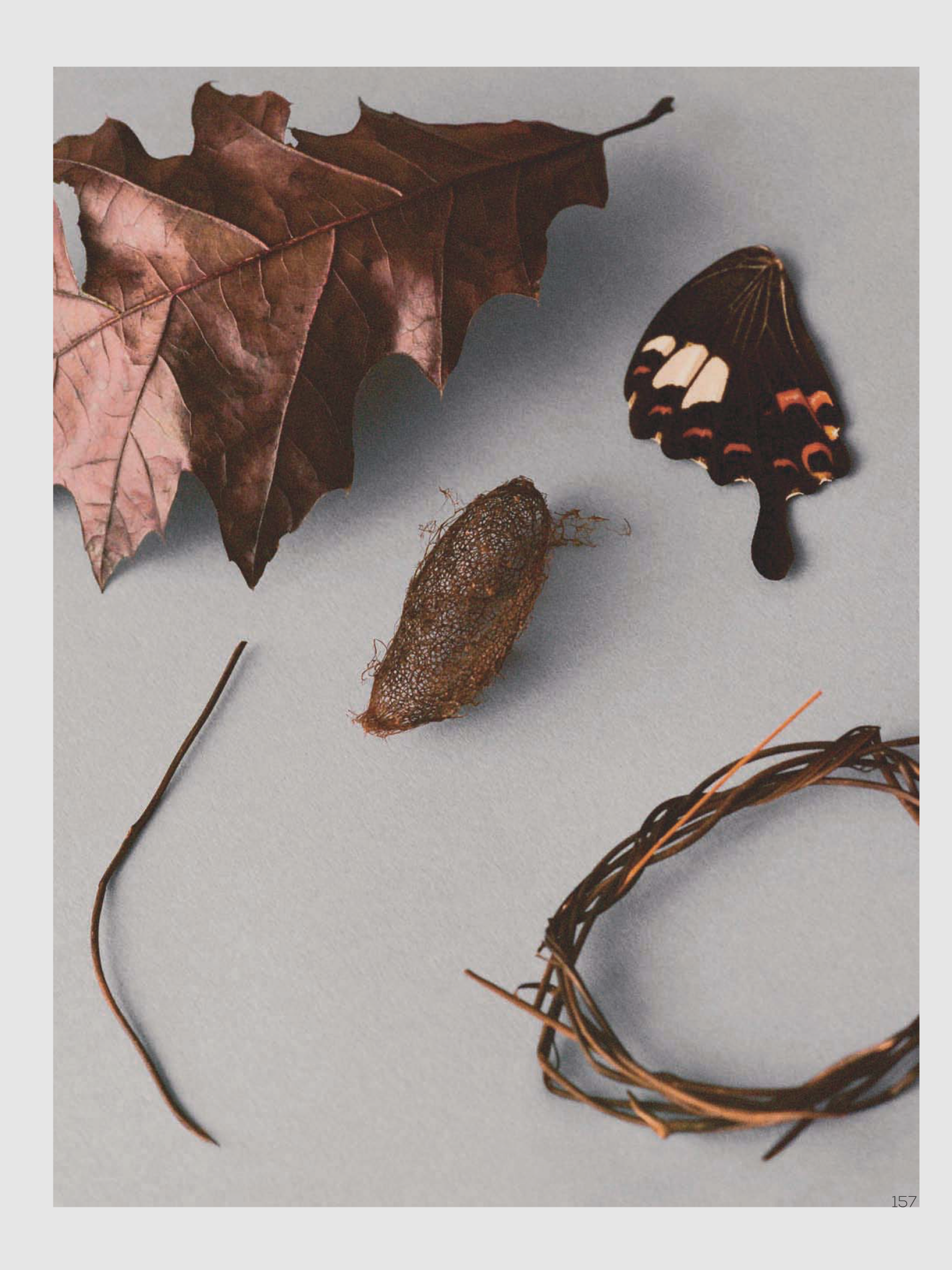 Butterfly-Ben-Toms-Vogue-China-+(2).png