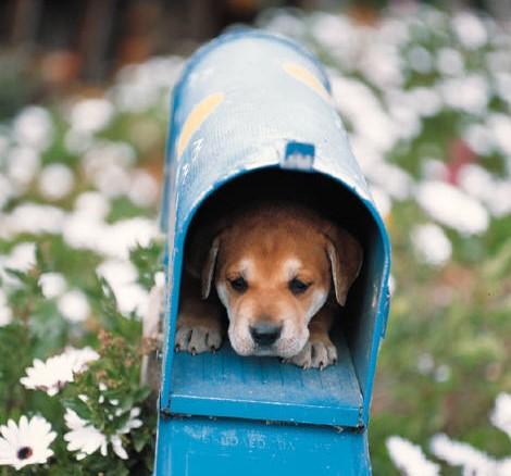 postkassehund.jpg