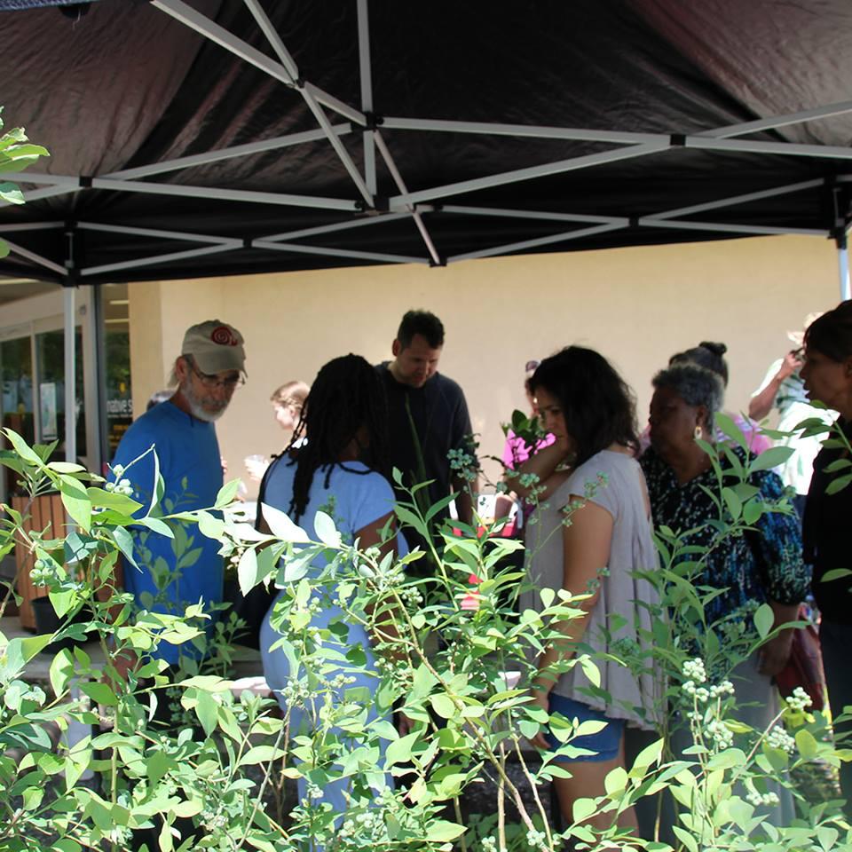 Edible Plant Sale 2016
