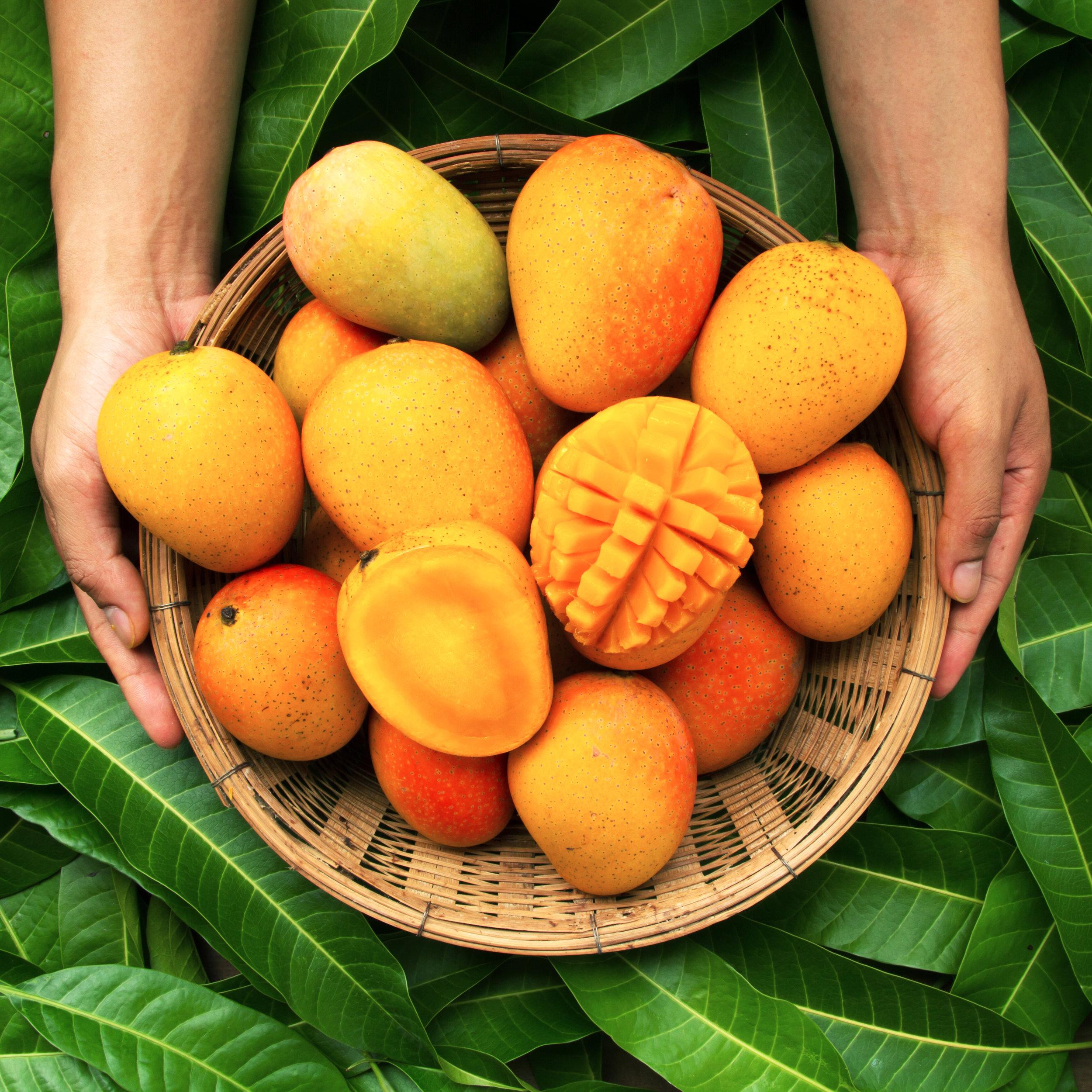 mangoes (1).jpg