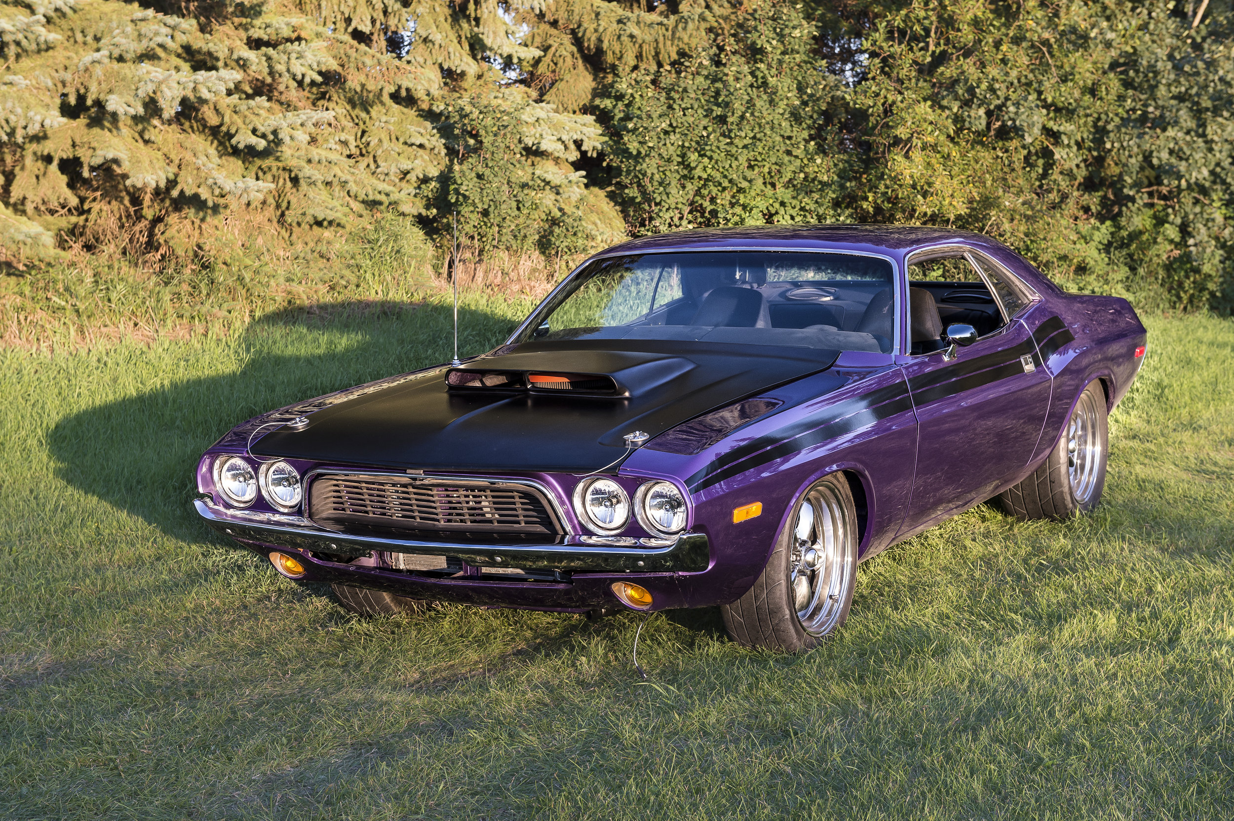 """1974 Dodge Challenger    This Car was complete restored locally in a frame off restoration                                                                 hich took place over a 10 year period. All aspects of the car were Rebuilt and upgraded to show room condition. The car has a 440 engine and 4 speed Standard Transmission. It has an 8-3/4 """"Rear Diff and is painted factory crazy purple. You will see this car and more at Just Kruzin Kruz nights."""