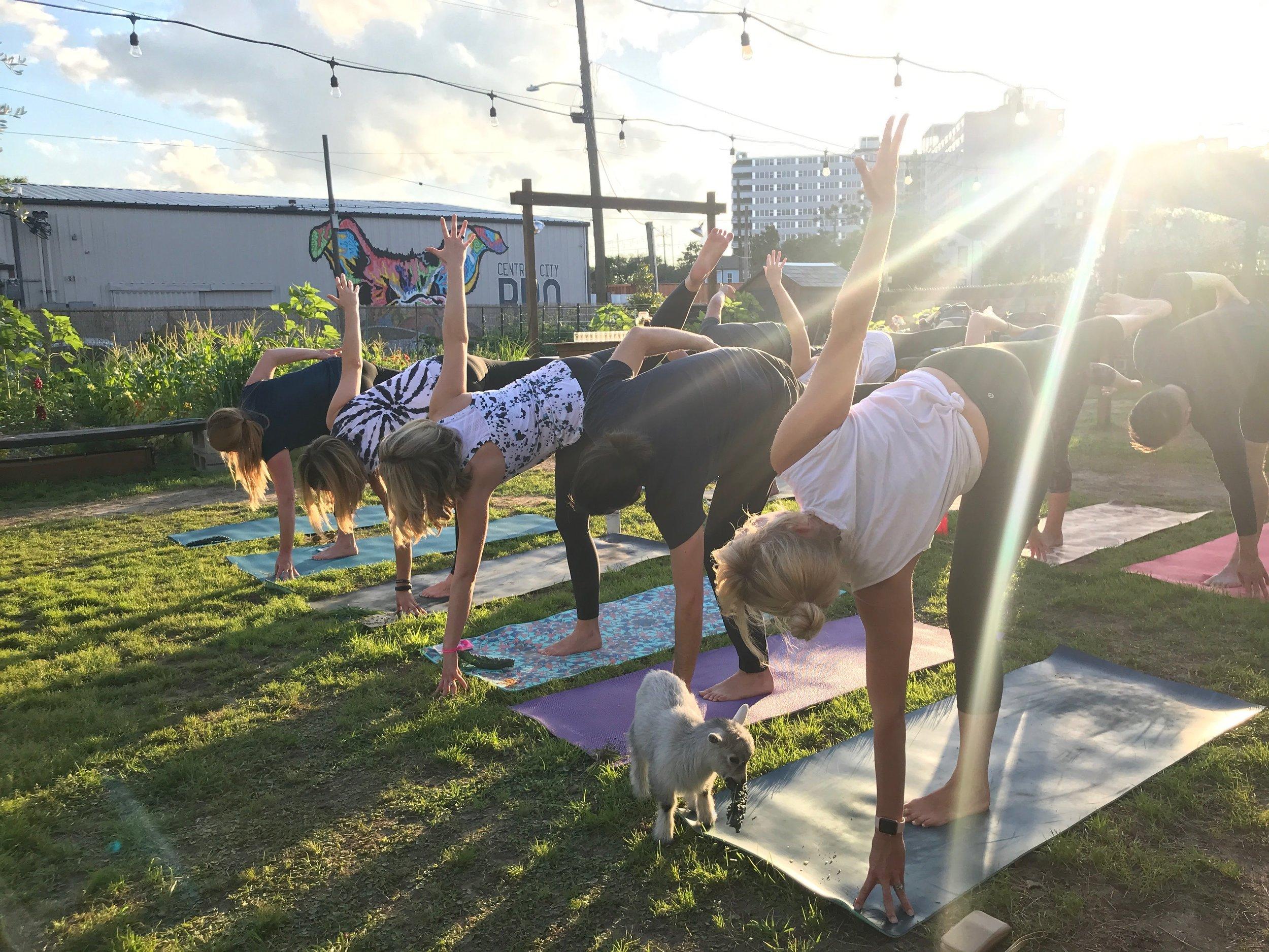 corporate goat yoga!