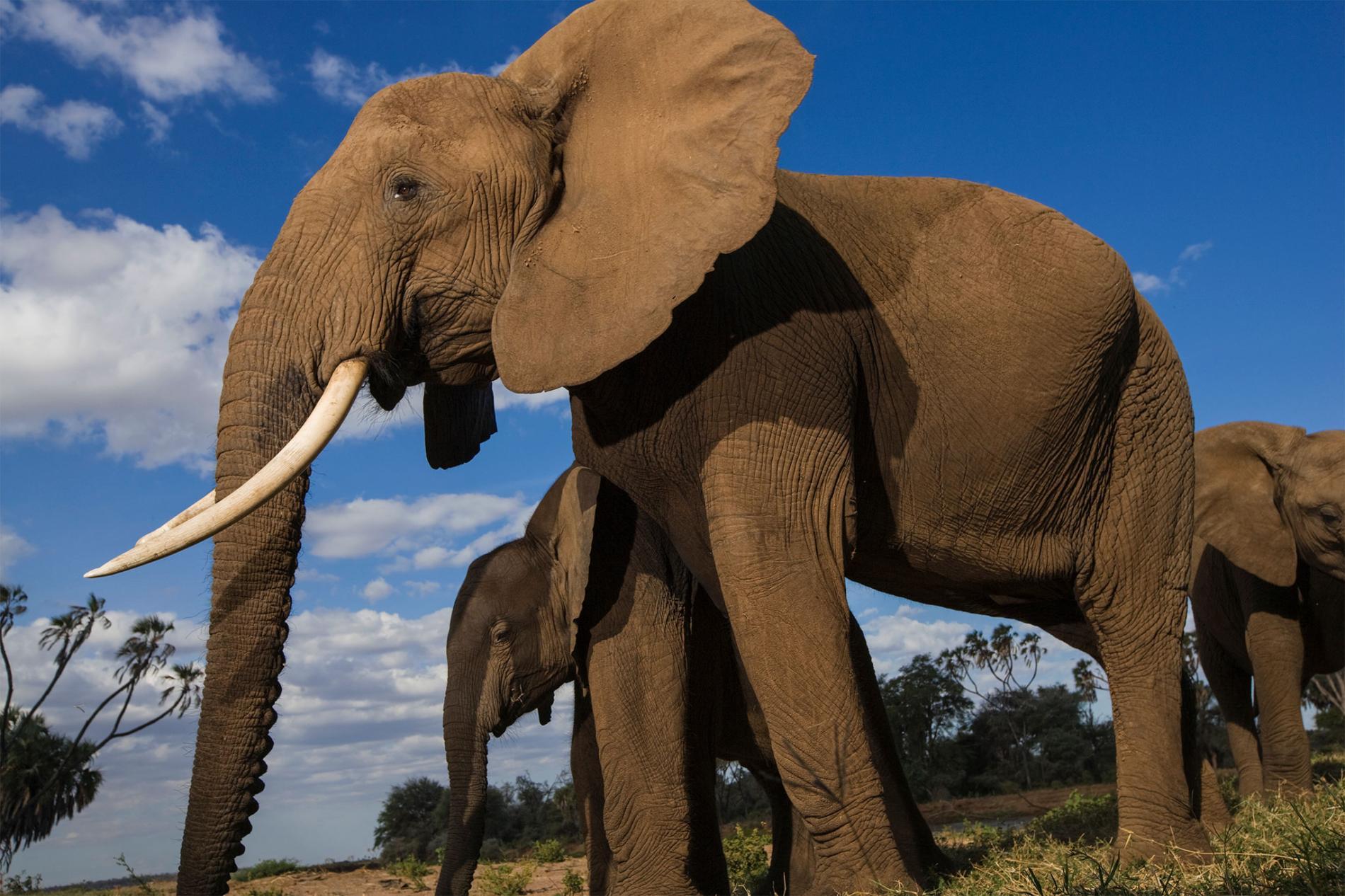 01-uk-ivory-ban.adapt.1900.1.jpg