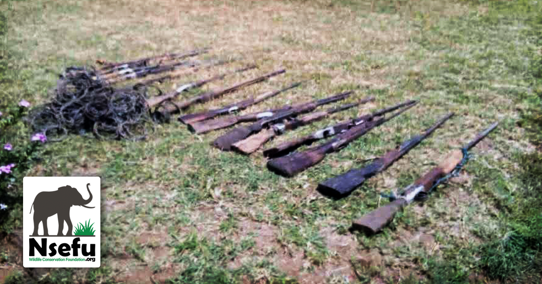 Rifles and Snares taken from poachers that will no longer kill wildlife!