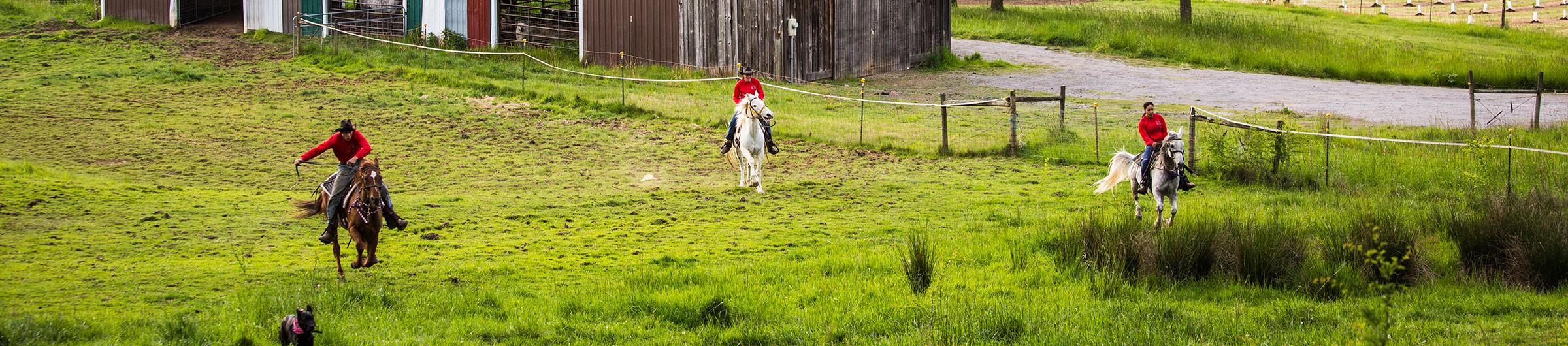 horseback-riding-yamhill-oregon