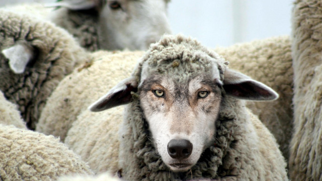 WolfSheep.jpg