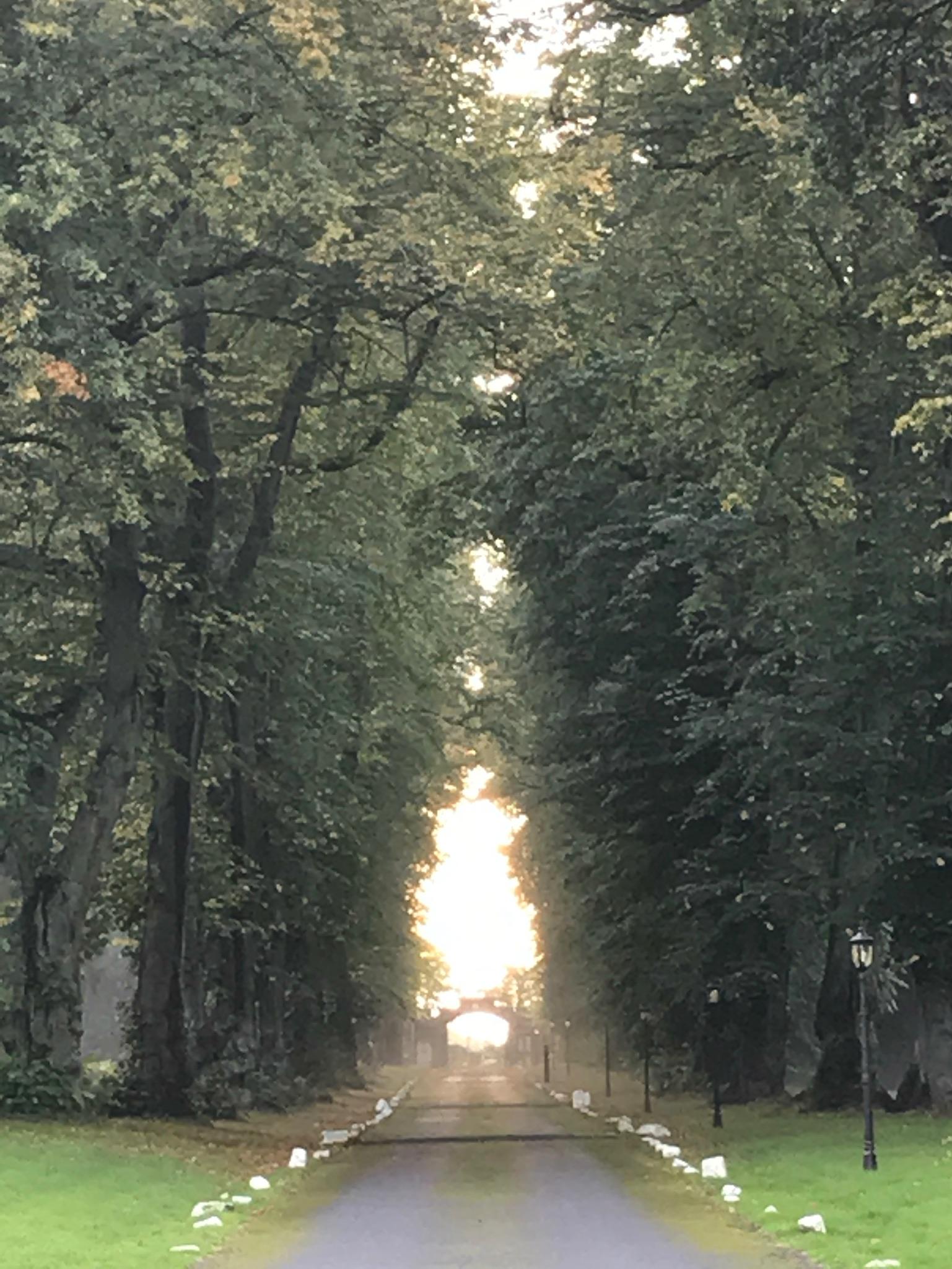 carberry lane.JPG