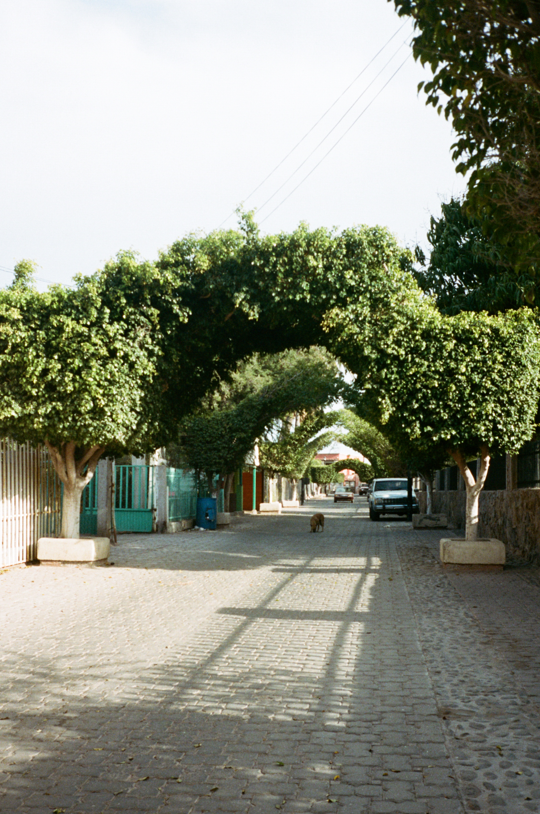 Baja-Portra-400_08.jpg