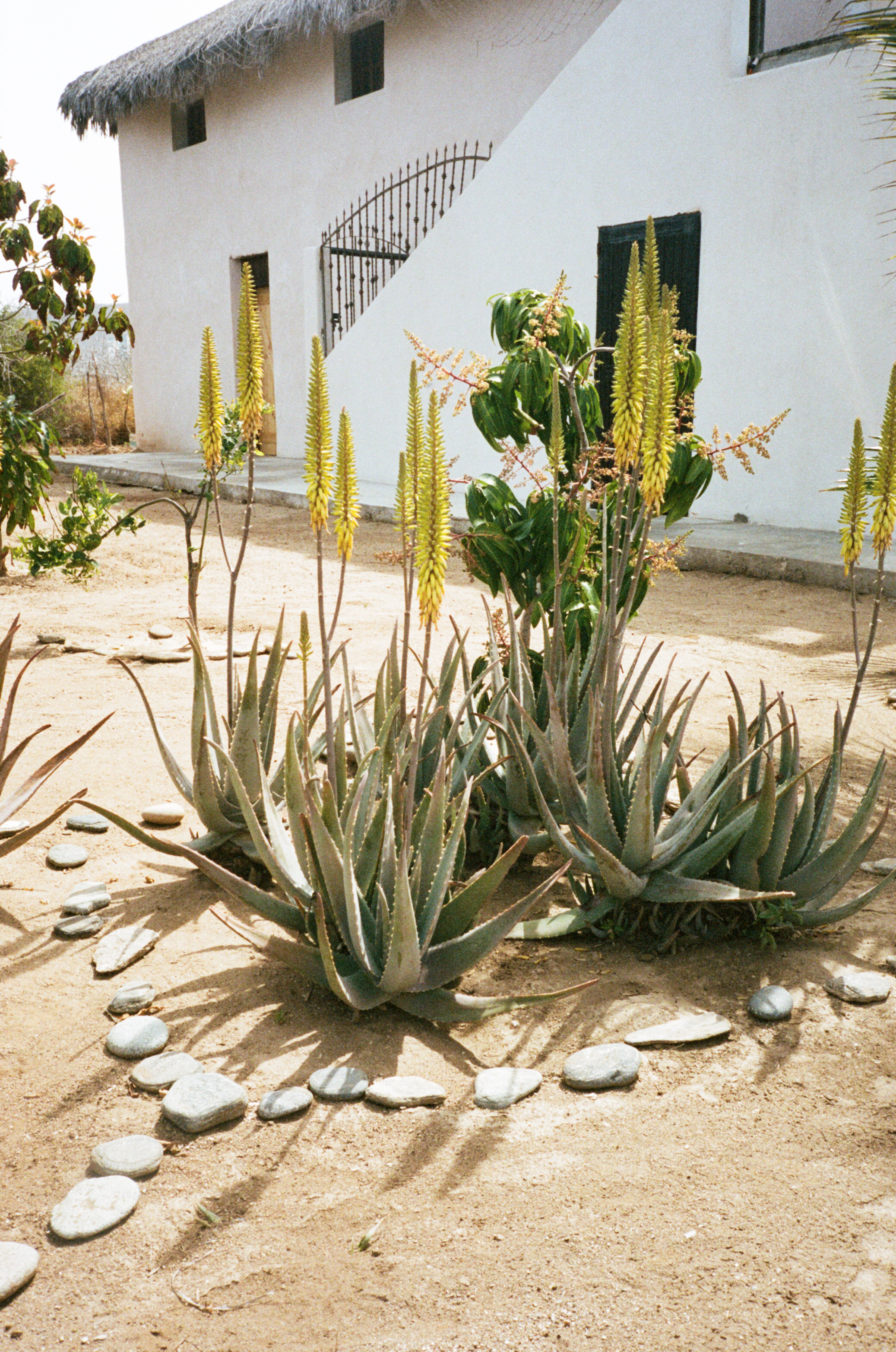 Baja-Portra-400_18.jpg