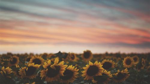 30Fifteen-happiness-sunflowers