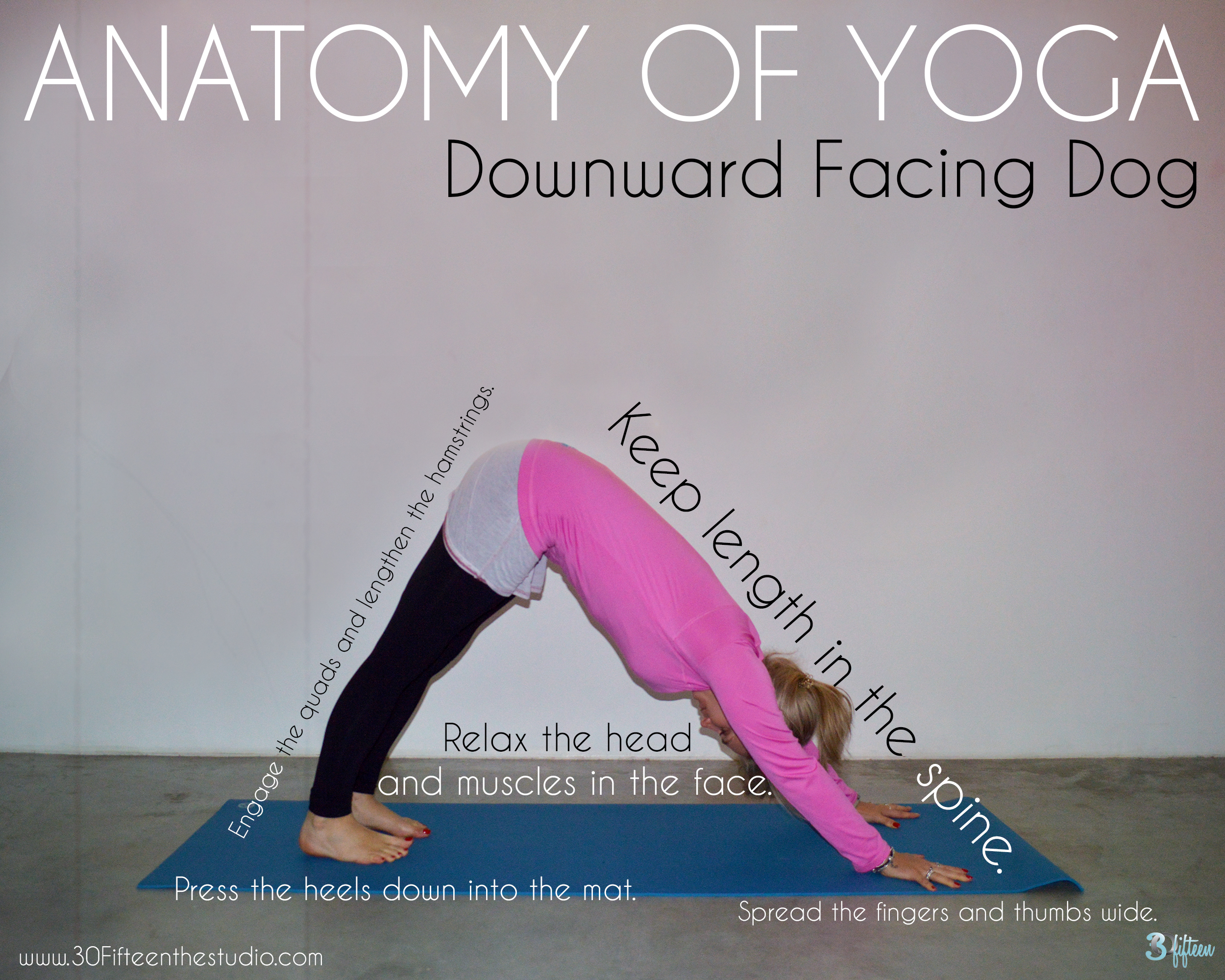 30Fifteen-yoga-anatomy-downward-facing-dog