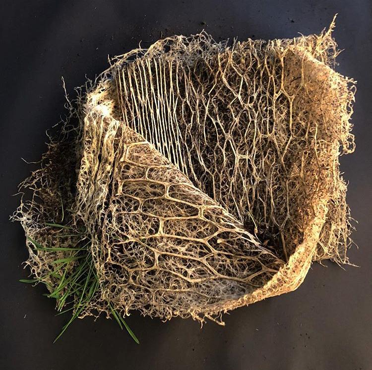 Diana Scherer - plant root weaving
