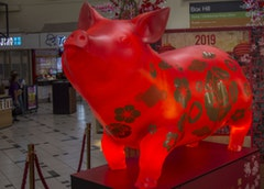 LUNAR NEW YEAR - PIG    Seen Technology, Australia    Shortlisted Sticker Download