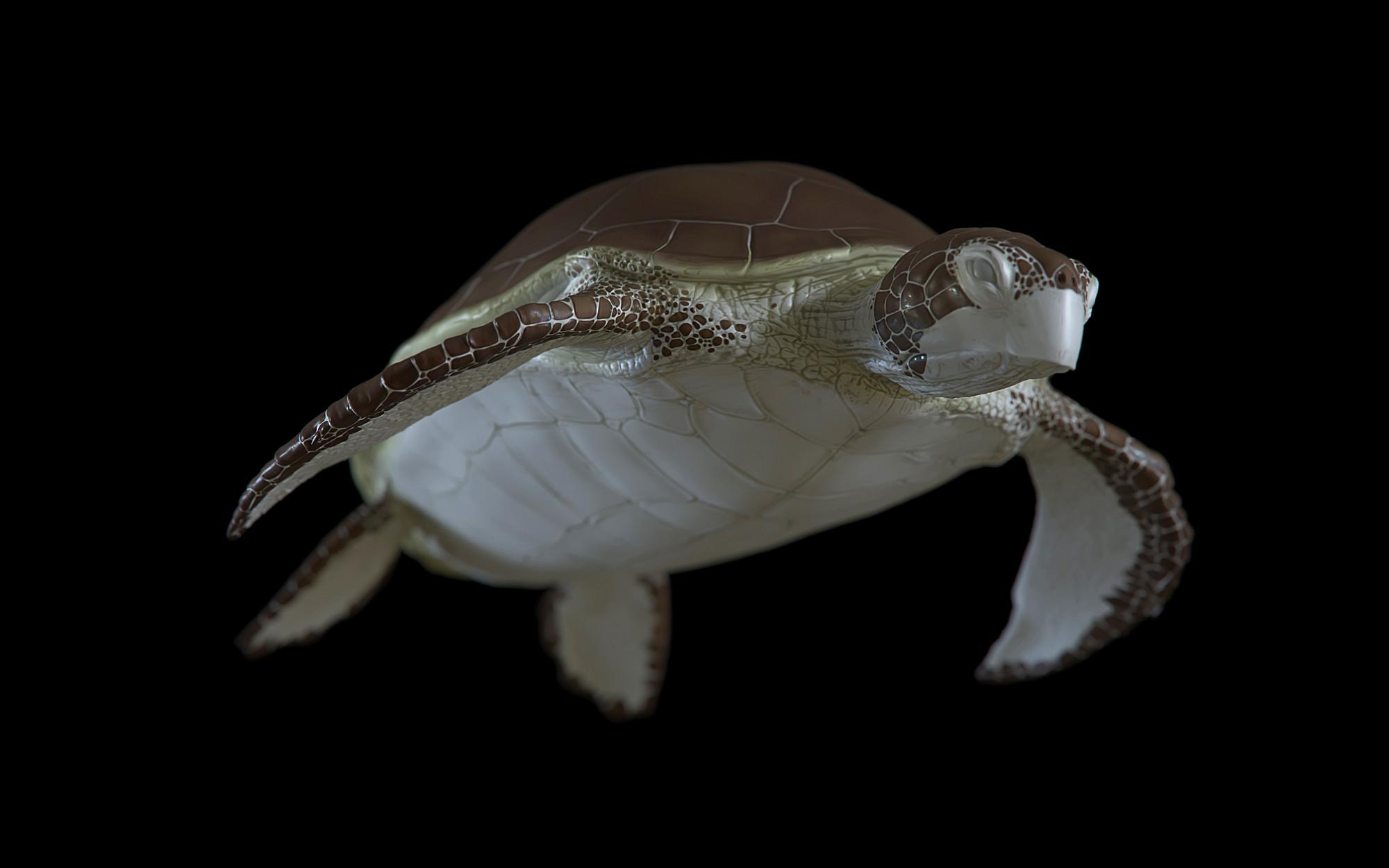 turtle-02.jpg