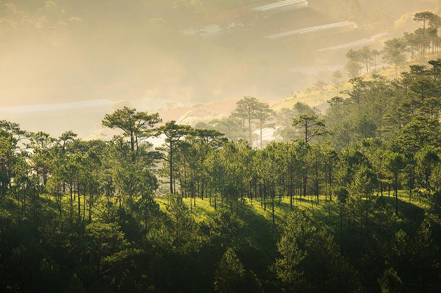 sunrise-in-da-lat-s-forest-duy-do.jpg
