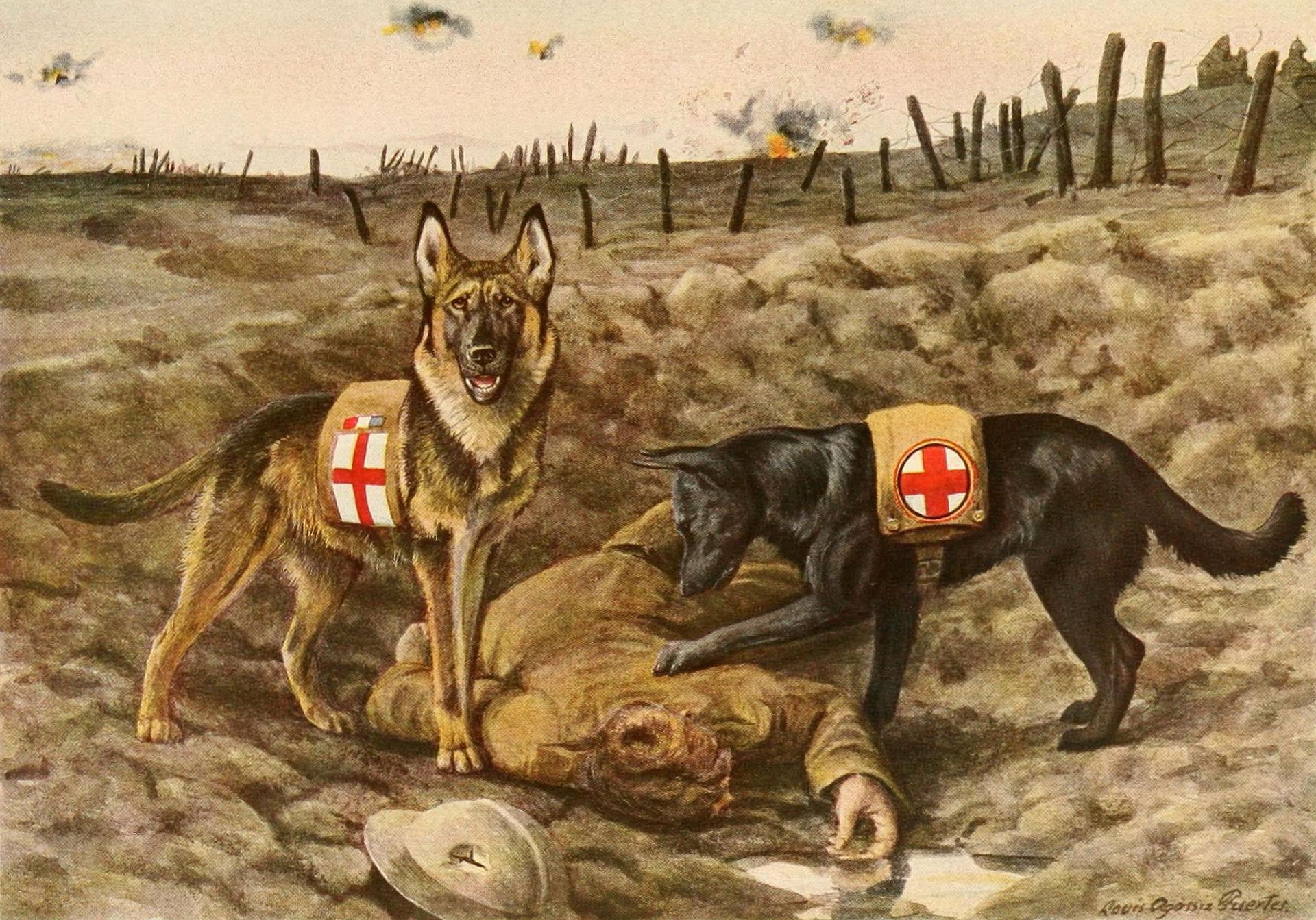 german-shepards-996405_1920.jpg