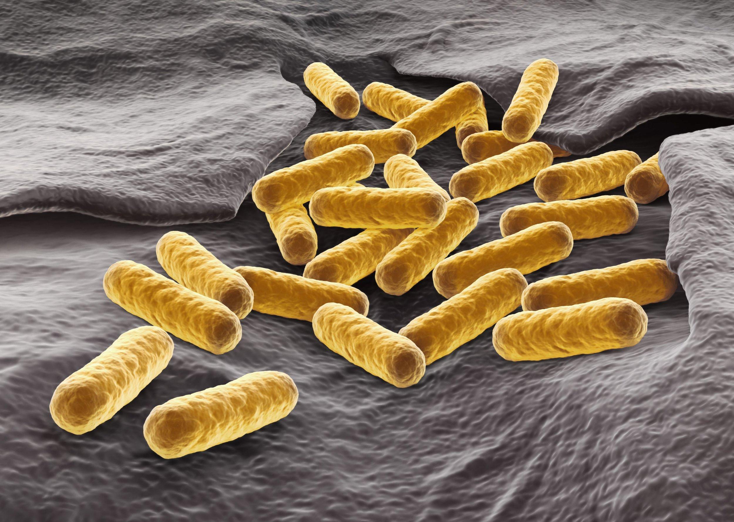 E. coli (small).jpg