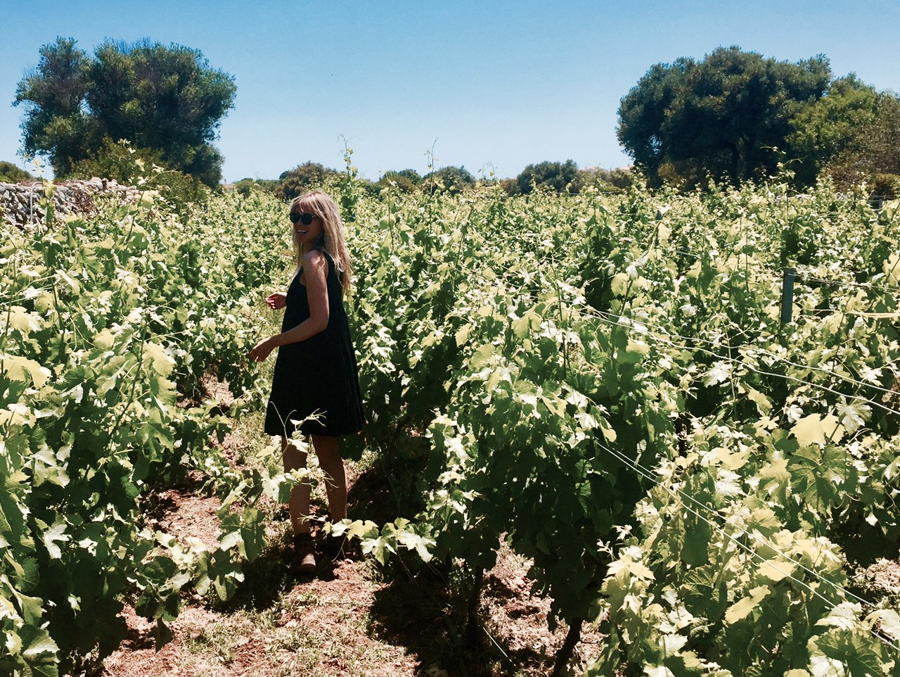 The vineyards at Binifadet