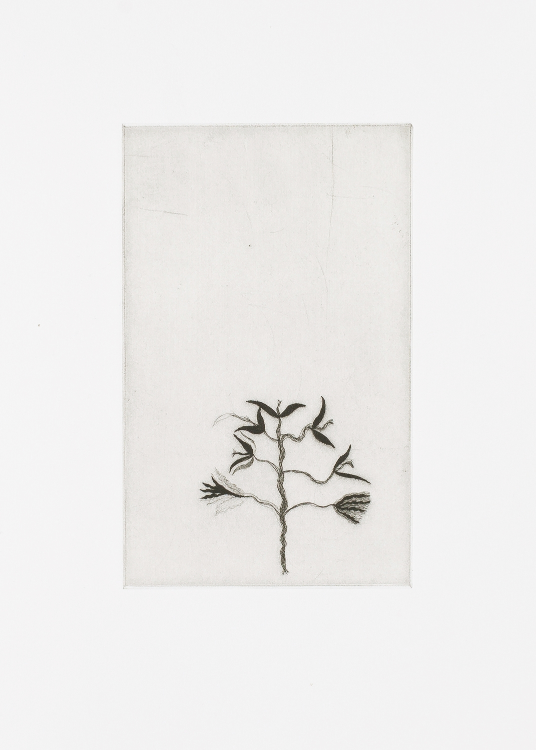 """Little Tree. 2007. Etching. 7"""" x 5"""""""