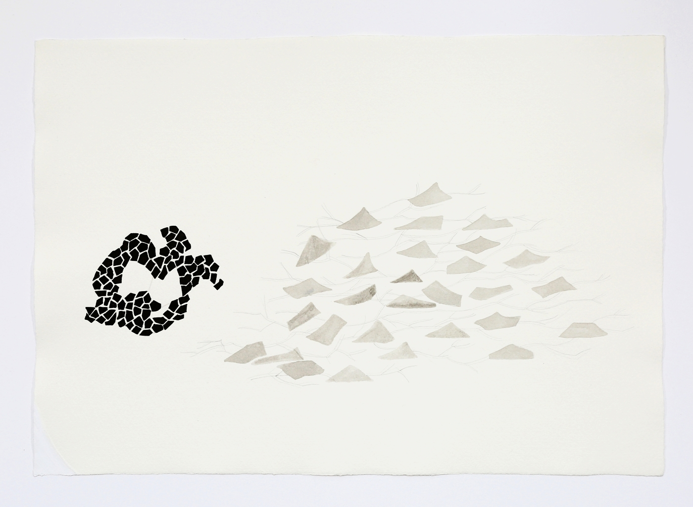 """Natural Patterns. 2011. Ink on paper. 11"""" x 17"""""""