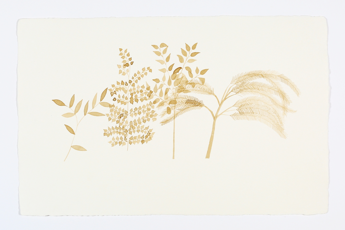 """Foliage. 2013. Ink on Paper. 11"""" x 17"""""""