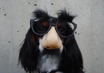 dog glasses.jpg