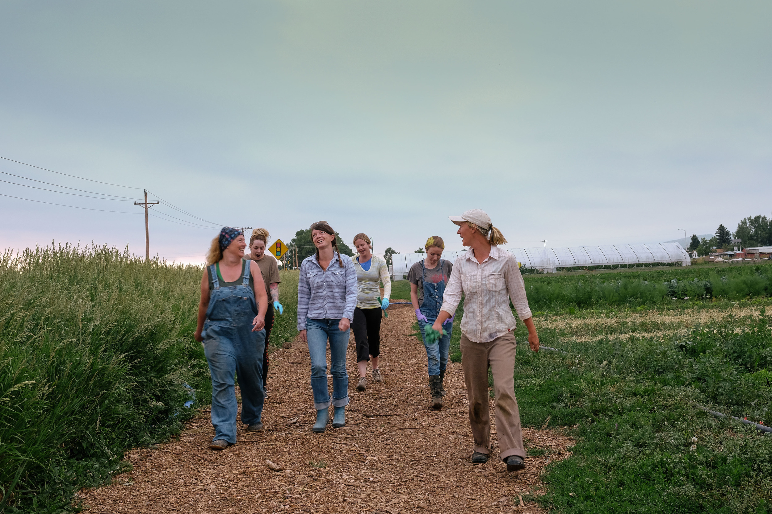 Katie Slota and the morning harvest crew, mostly CSA members, hit the fields just after 6:00 a.m.