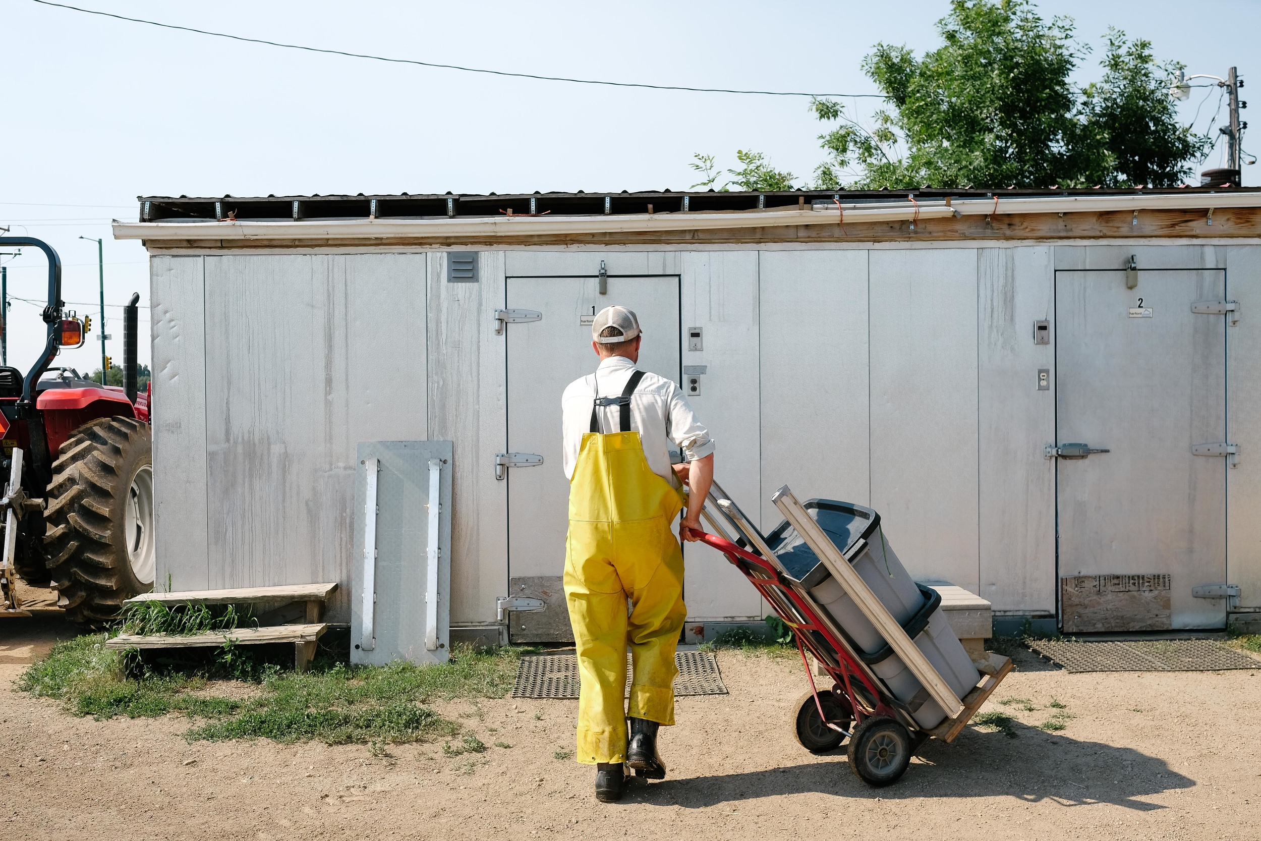 All of the farm's vegetables are stored in walk-in refrigerators after being trimmed and washed.