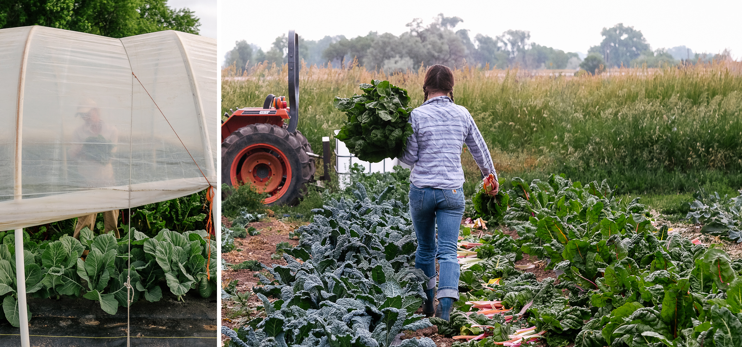 Native Hill Farm is known, in part, for their abundance of greens.