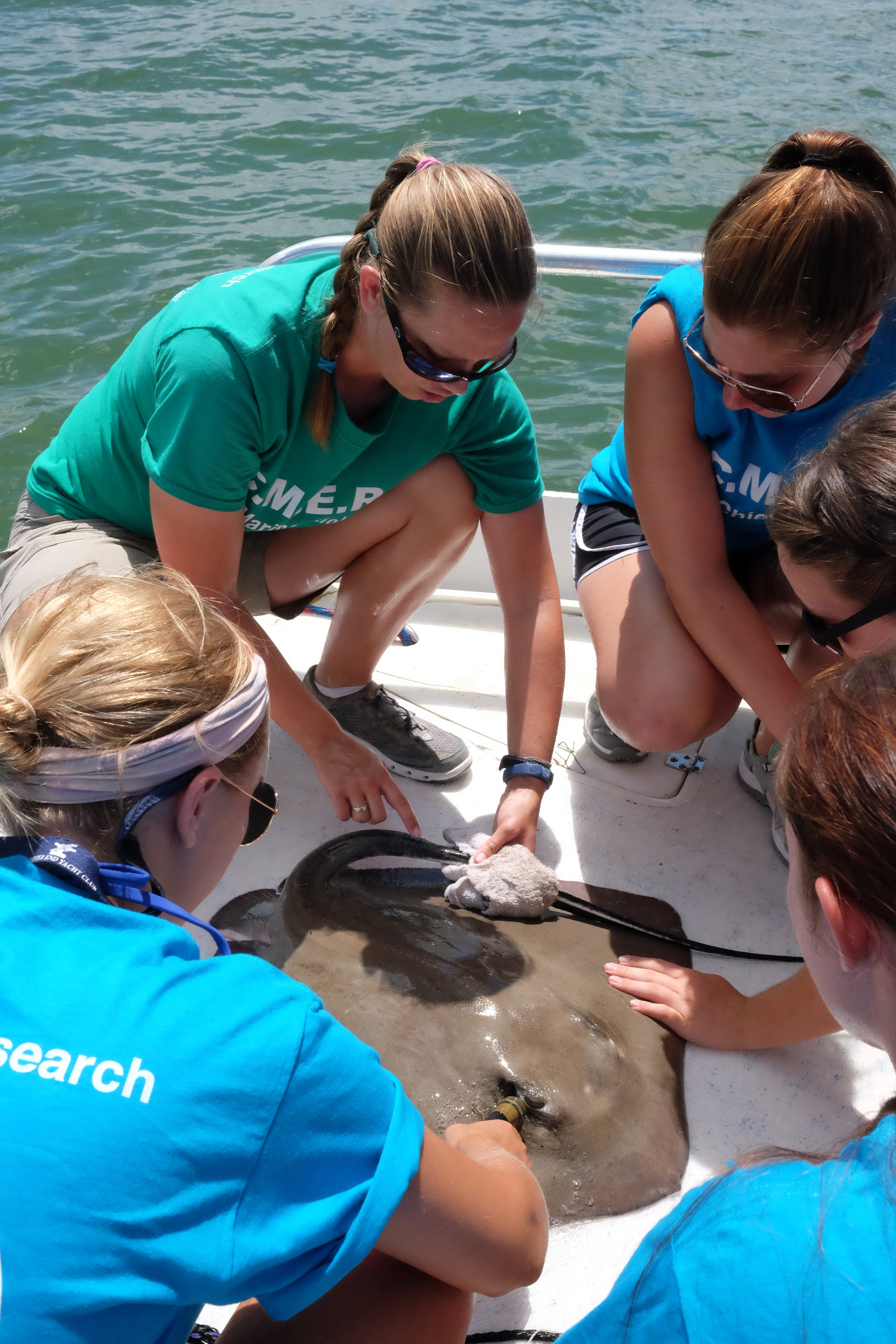 Moriah Moore points out the venomous barb atop this southern stingray's tail.