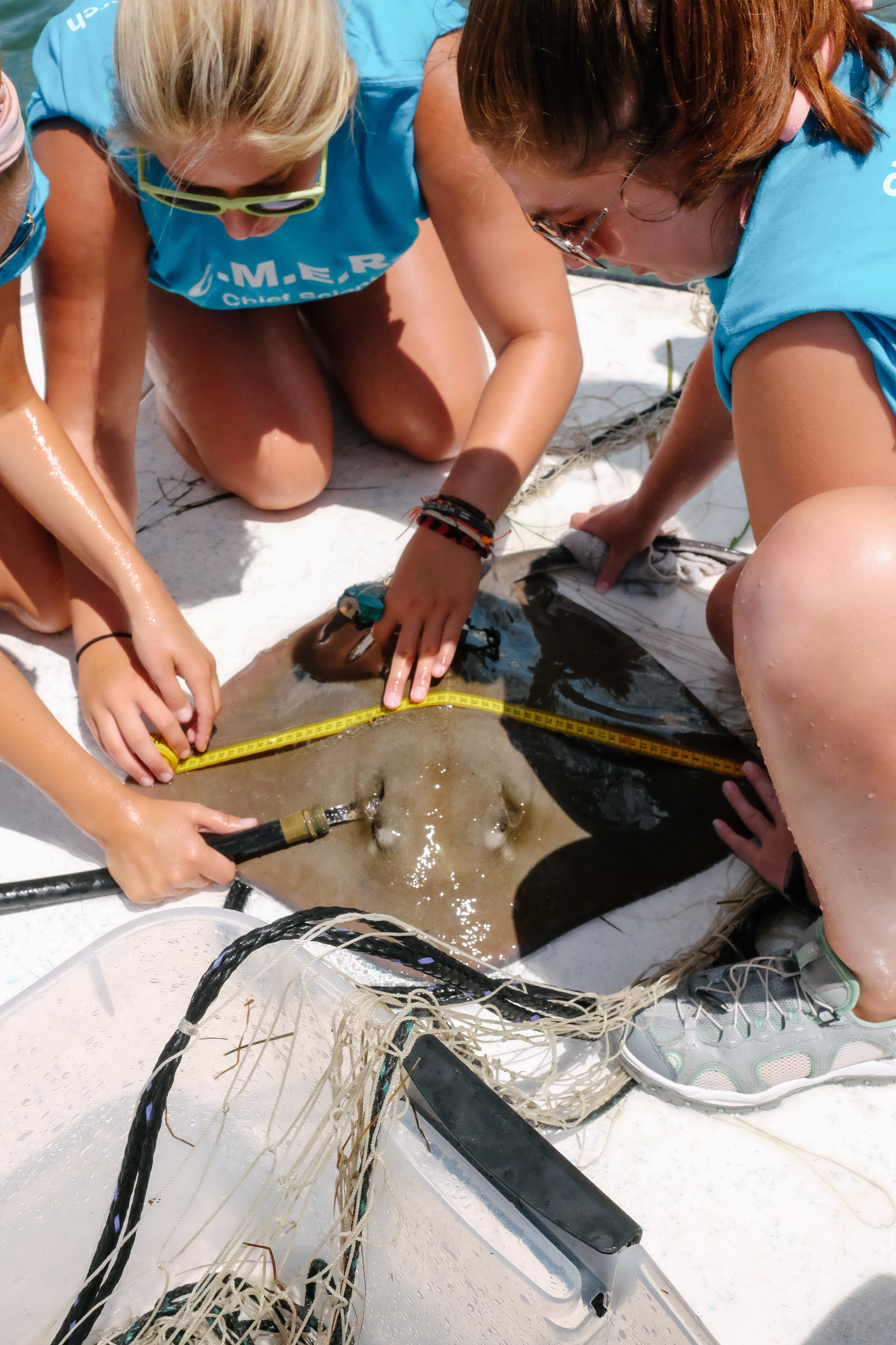 CMERA students identify, measure, and tag a southern stingray in the Gulf of Mexico. Their findings will be reported to the Florida Fish and Wildlife Conservation Commission.