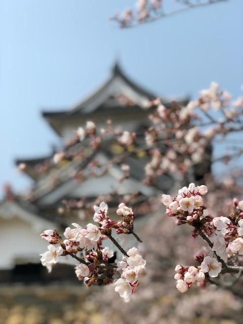 hikone spring 2018.jpg