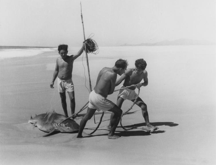 Lola Alvarez Bravo, Shark fishermen, Acapulco, 1950